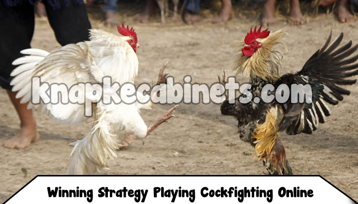Winning Strategy Playing Cockfighting Online